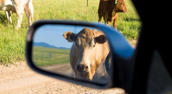 Emissions: Cars vs Cattle?