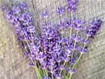 herb-flower-lavender-lss-000_3807